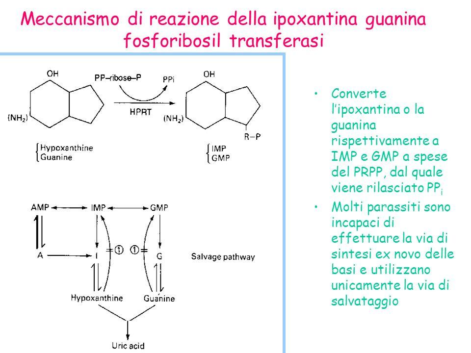 Meccanismo di reazione della ipoxantina guanina fosforibosil transferasi