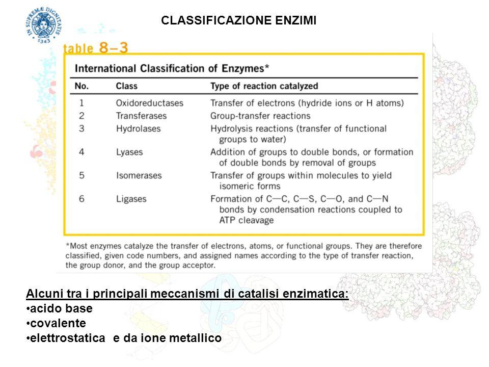 CLASSIFICAZIONE ENZIMI