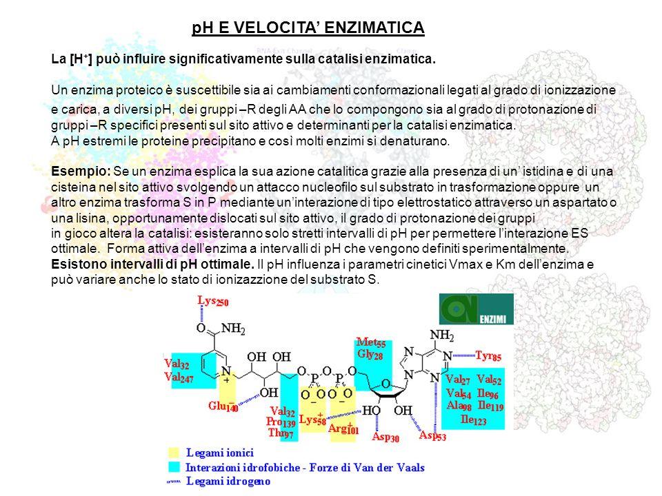 pH E VELOCITA' ENZIMATICA
