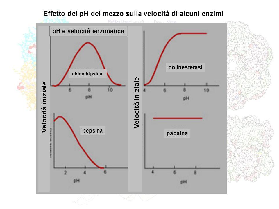 Effetto del pH del mezzo sulla velocità di alcuni enzimi