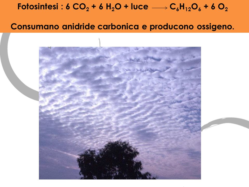 Fotosintesi : 6 CO2 + 6 H2O + luce C6H12O6 + 6 O2