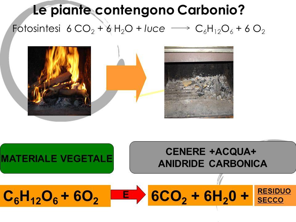 Le piante contengono Carbonio