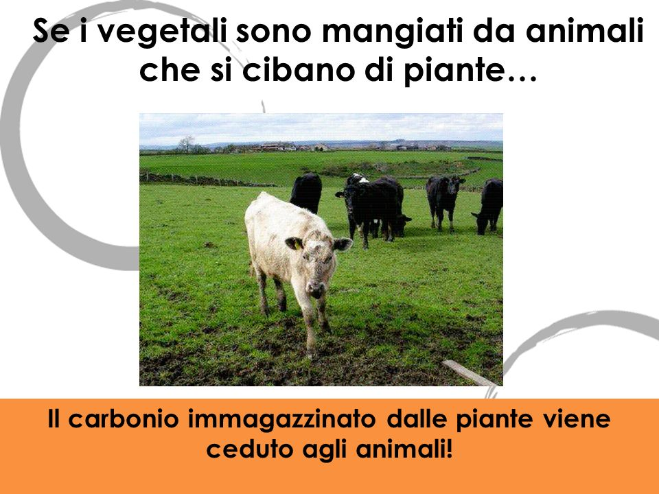 Se i vegetali sono mangiati da animali che si cibano di piante…