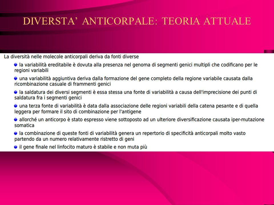 DIVERSTA' ANTICORPALE: TEORIA ATTUALE