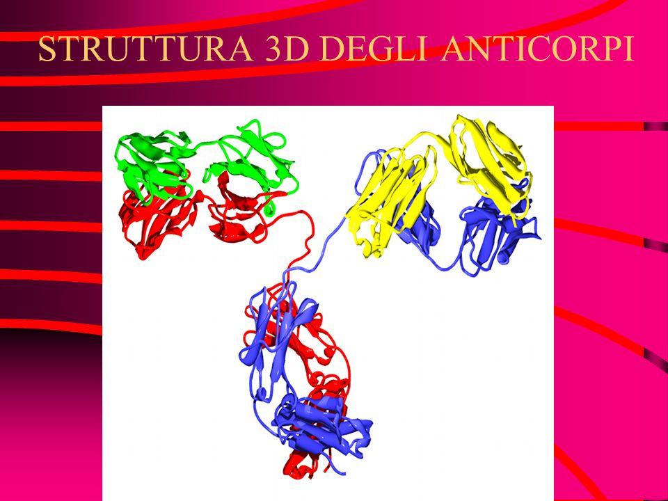 STRUTTURA 3D DEGLI ANTICORPI