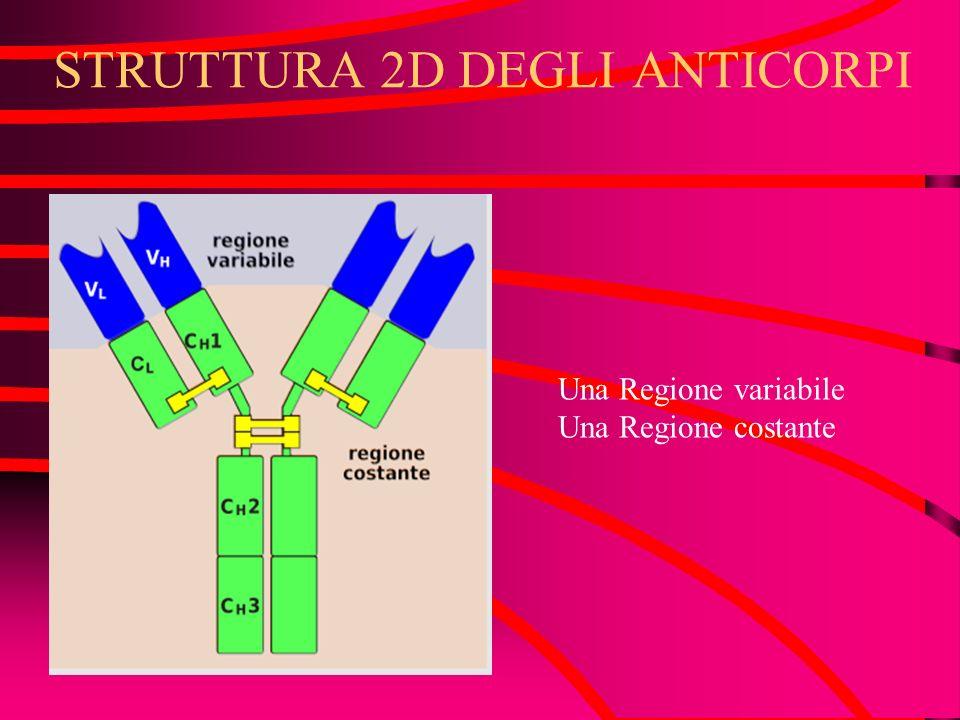 STRUTTURA 2D DEGLI ANTICORPI