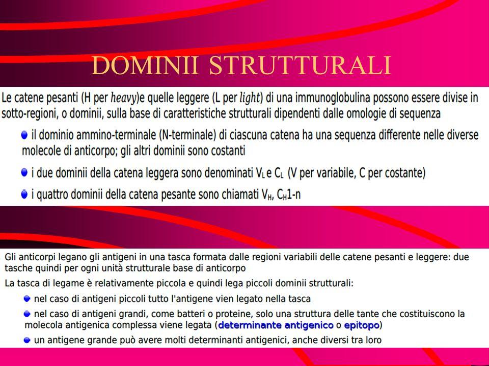 DOMINII STRUTTURALI