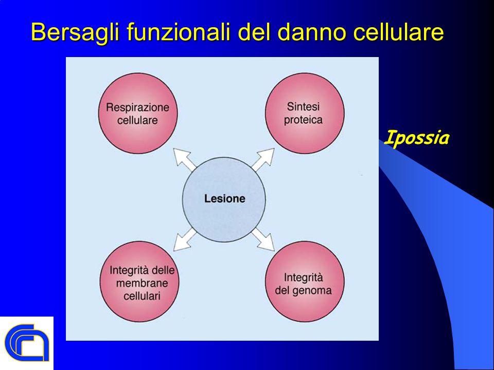 Bersagli funzionali del danno cellulare