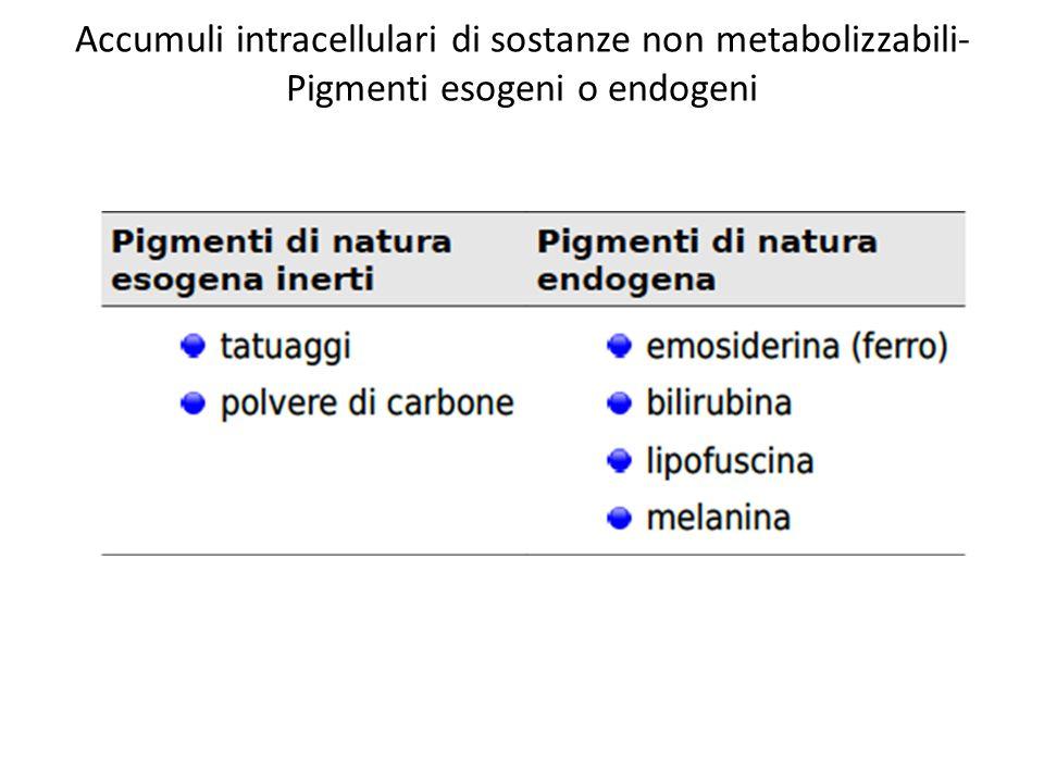 Accumuli intracellulari di sostanze non metabolizzabili-Pigmenti esogeni o endogeni
