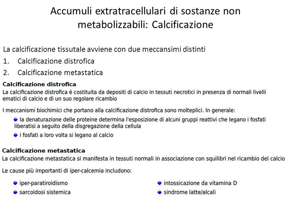 Accumuli extratracellulari di sostanze non metabolizzabili: Calcificazione