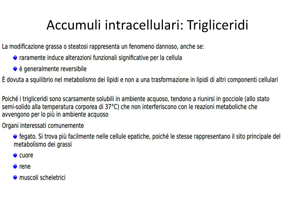 Accumuli intracellulari: Trigliceridi