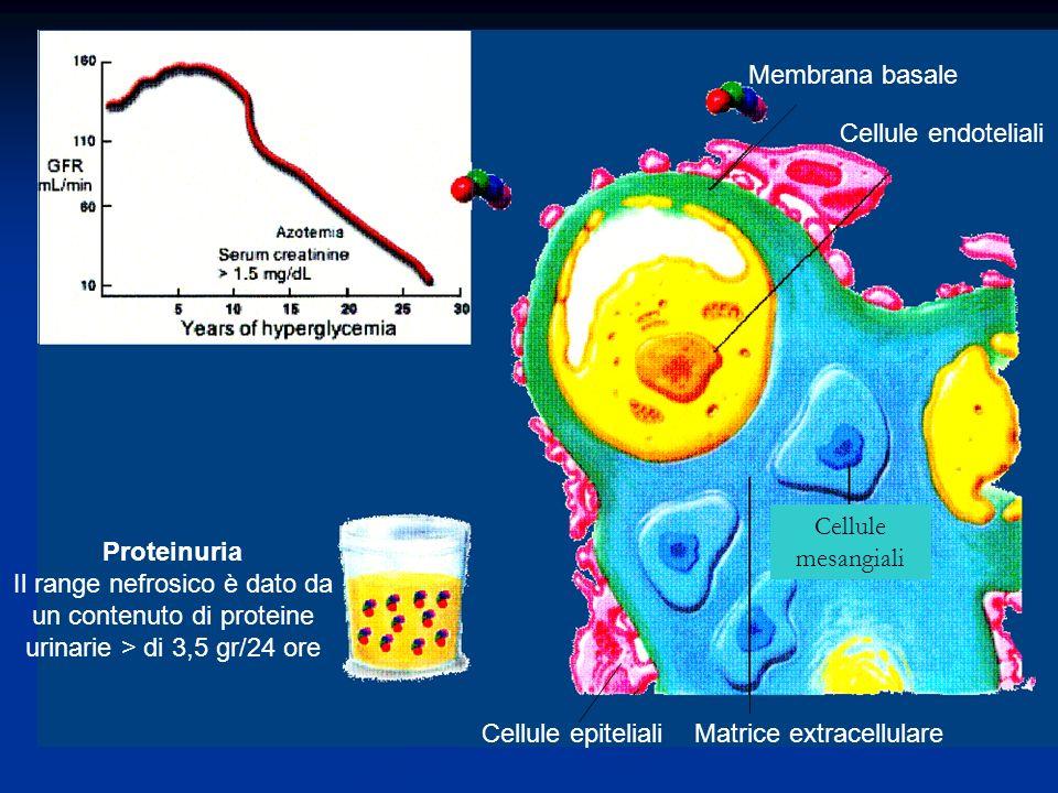 Membrana basale Cellule endoteliali. Cellule. mesangiali. Proteinuria.