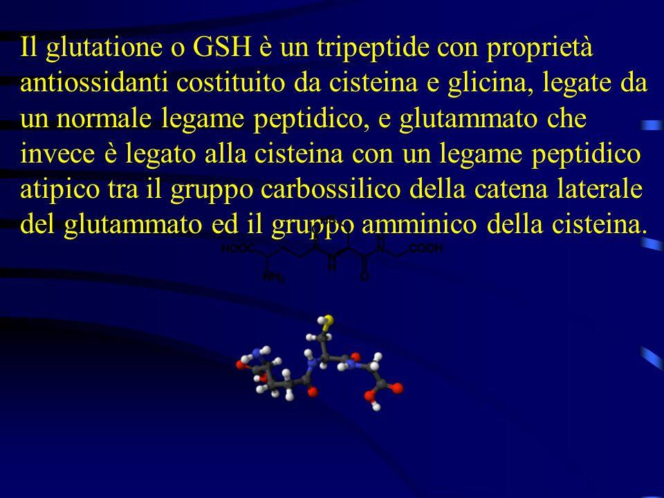 Il glutatione o GSH è un tripeptide con proprietà antiossidanti costituito da cisteina e glicina, legate da un normale legame peptidico, e glutammato che invece è legato alla cisteina con un legame peptidico atipico tra il gruppo carbossilico della catena laterale del glutammato ed il gruppo amminico della cisteina.