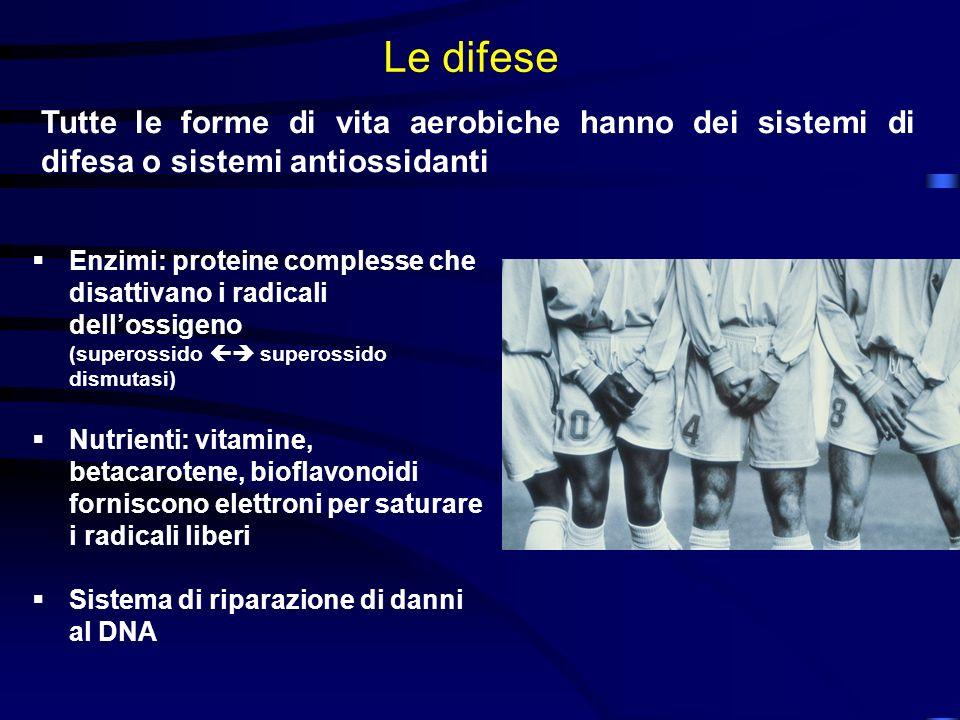Le difese Tutte le forme di vita aerobiche hanno dei sistemi di difesa o sistemi antiossidanti.