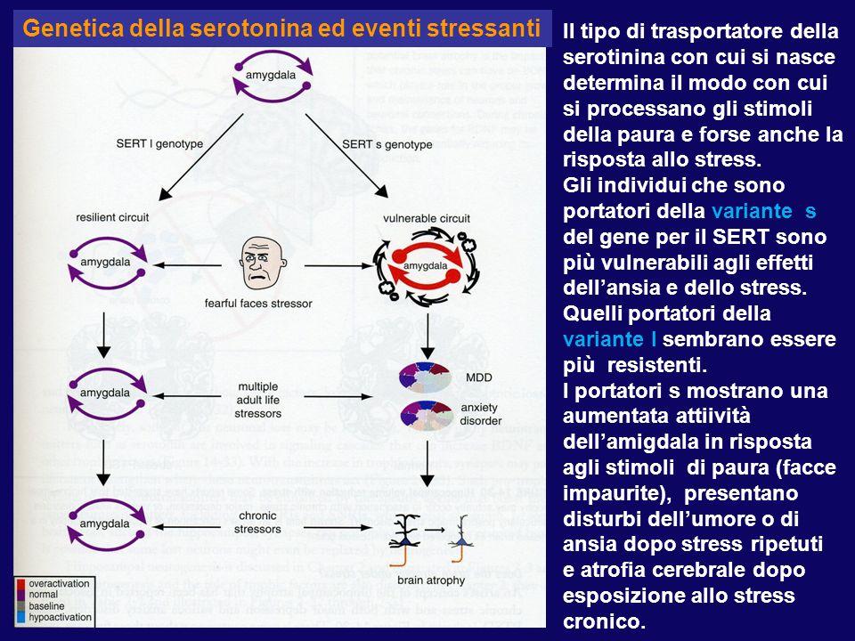 Il ruolo della Serotonina