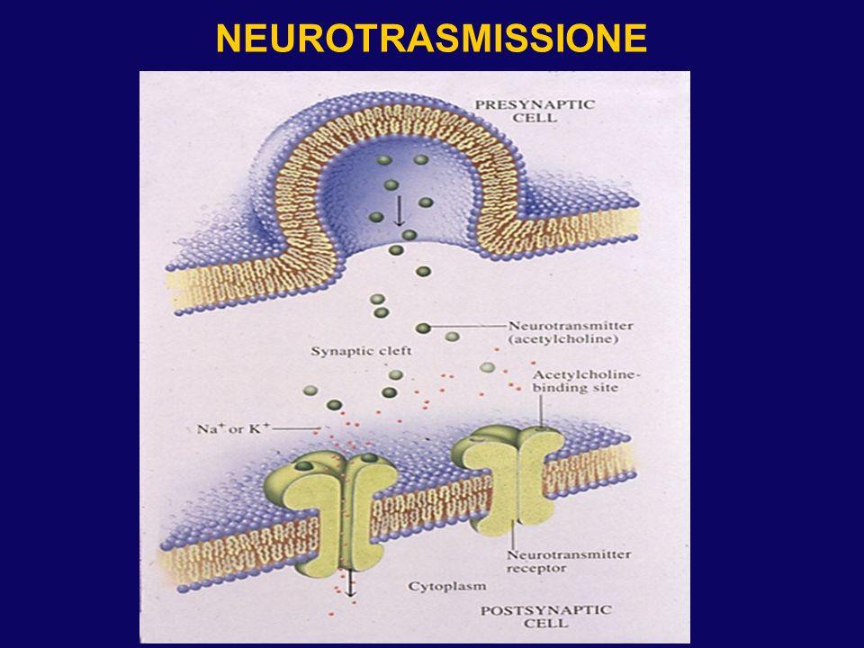 NEUROTRASMISSIONE SEROTONINERGICA