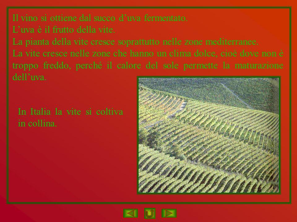 Il vino si ottiene dal succo d'uva fermentato.