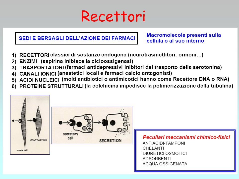 Macromolecole presenti sulla cellula o al suo interno