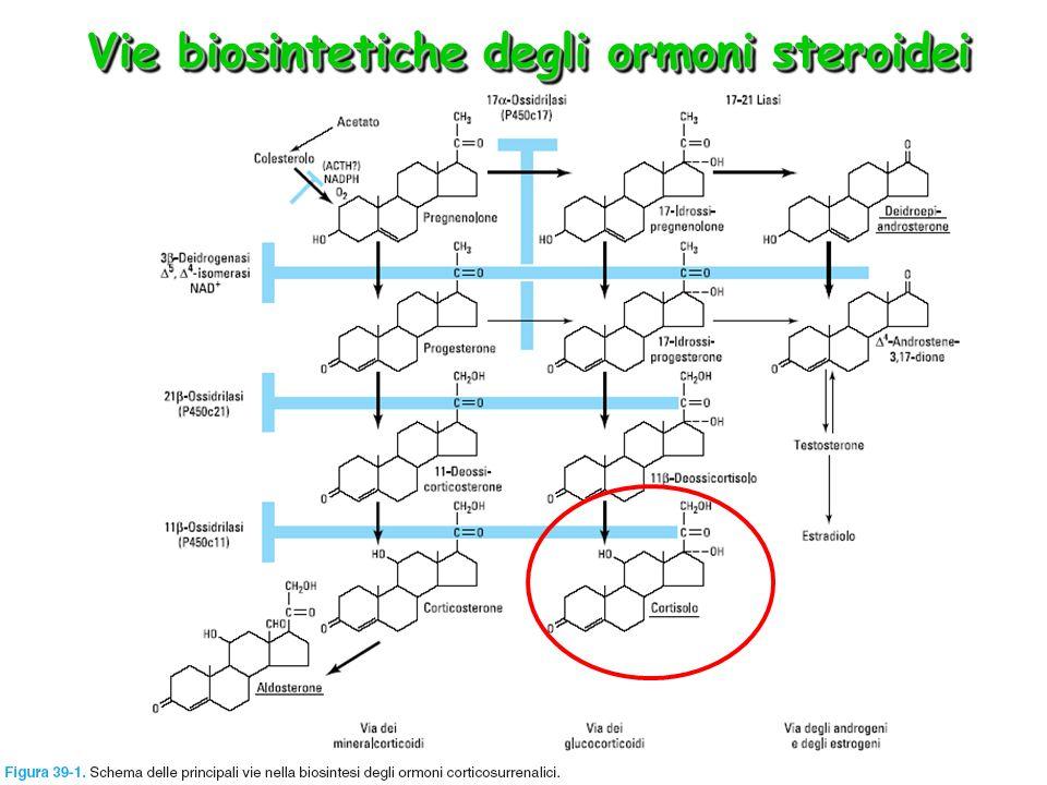 Vie biosintetiche degli ormoni steroidei