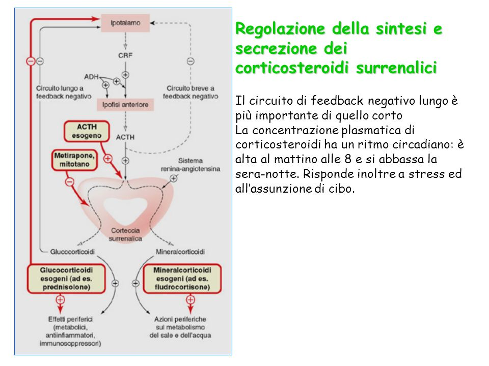 Regolazione della sintesi e secrezione dei corticosteroidi surrenalici