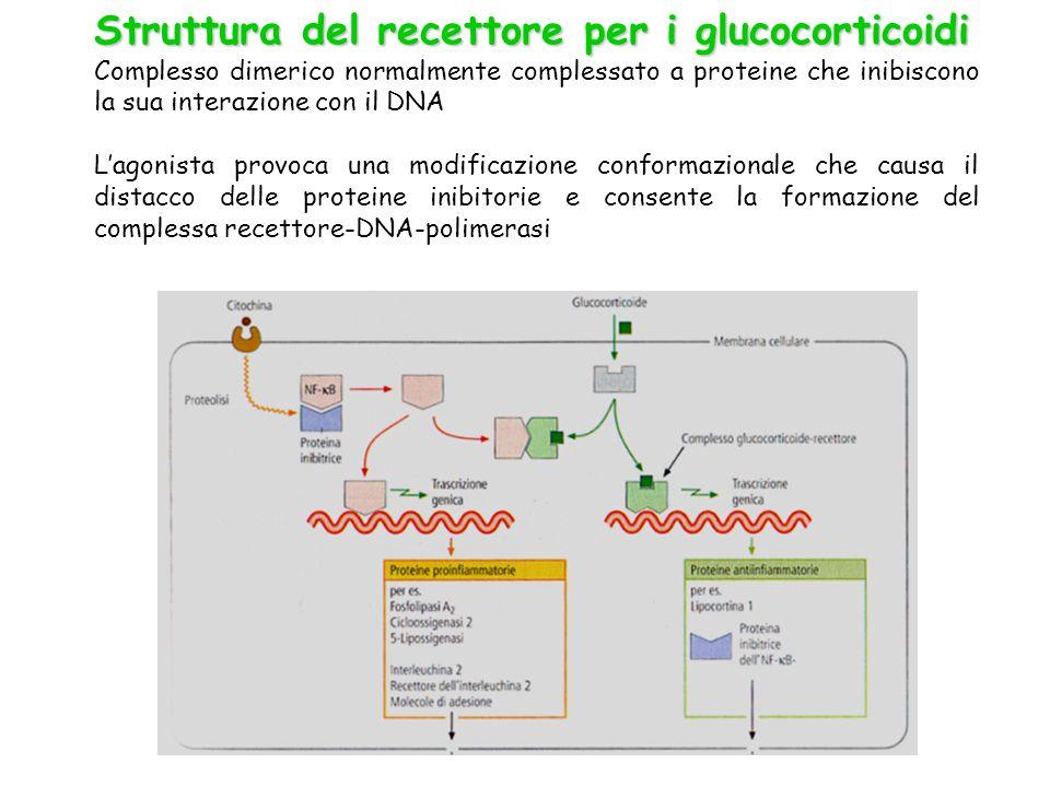 Struttura del recettore per i glucocorticoidi