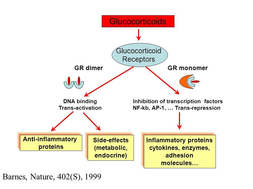 Glucocorticoids Barnes, Nature, 402(S), 1999 Glucocorticoid Receptors