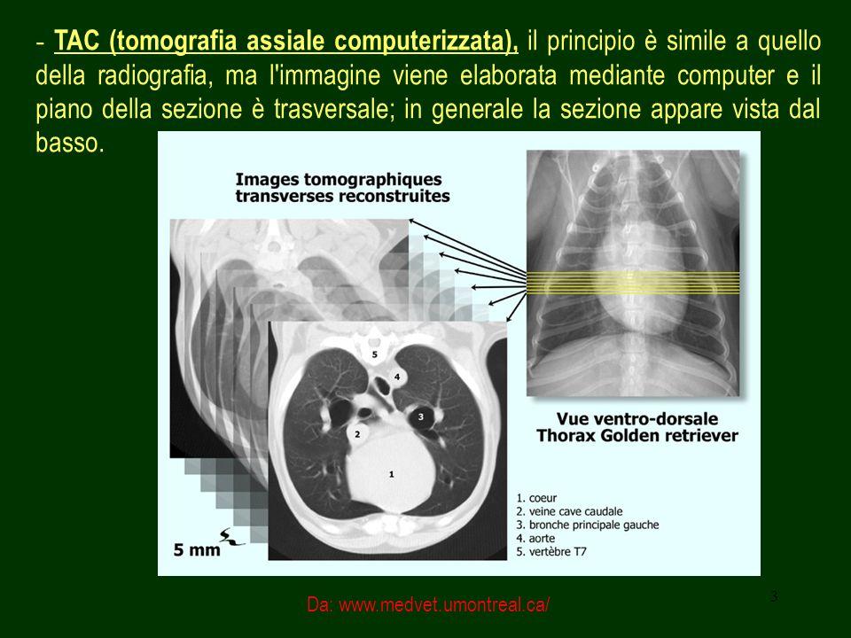 - TAC (tomografia assiale computerizzata), il principio è simile a quello della radiografia, ma l immagine viene elaborata mediante computer e il piano della sezione è trasversale; in generale la sezione appare vista dal basso.