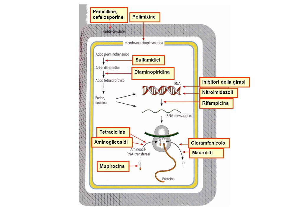 Penicilline, cefalosporine. Polimixine. Sulfamidici. Diaminopiridina. Inibitori della girasi. Nitroimidazoli.