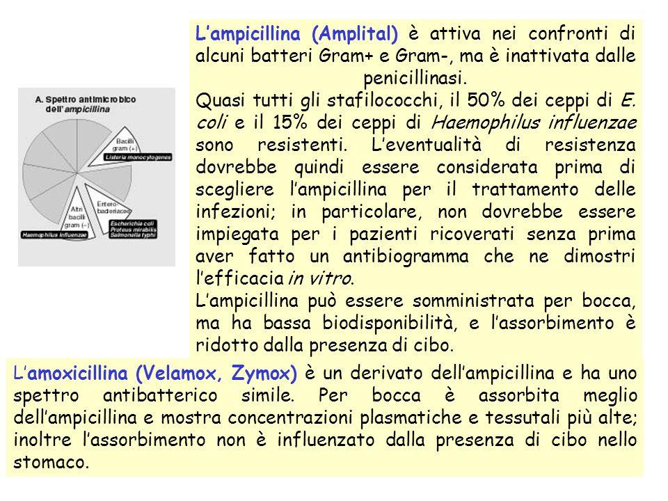 L'ampicillina (Amplital) è attiva nei confronti di alcuni batteri Gram+ e Gram-, ma è inattivata dalle penicillinasi. Quasi tutti gli stafilococchi, il 50% dei ceppi di E. coli e il 15% dei ceppi di Haemophilus influenzae sono resistenti. L'eventualità di resistenza dovrebbe quindi essere considerata prima di scegliere l'ampicillina per il trattamento delle infezioni; in particolare, non dovrebbe essere impiegata per i pazienti ricoverati senza prima aver fatto un antibiogramma che ne dimostri l'efficacia in vitro.