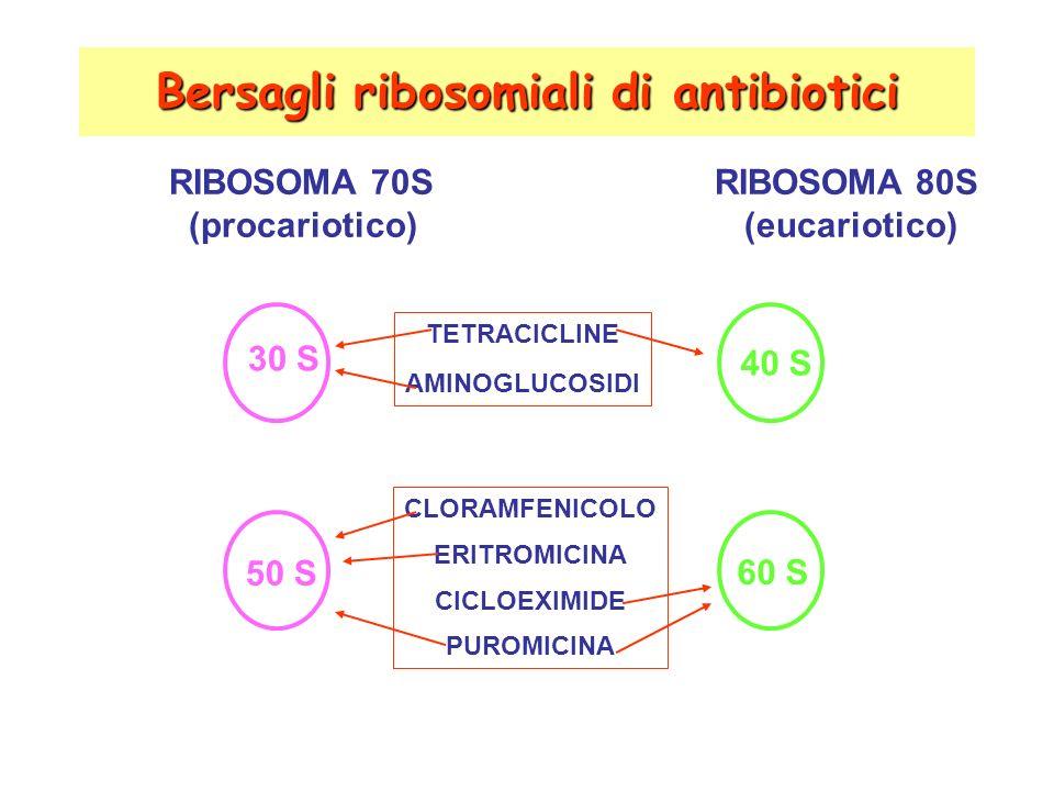 Bersagli ribosomiali di antibiotici