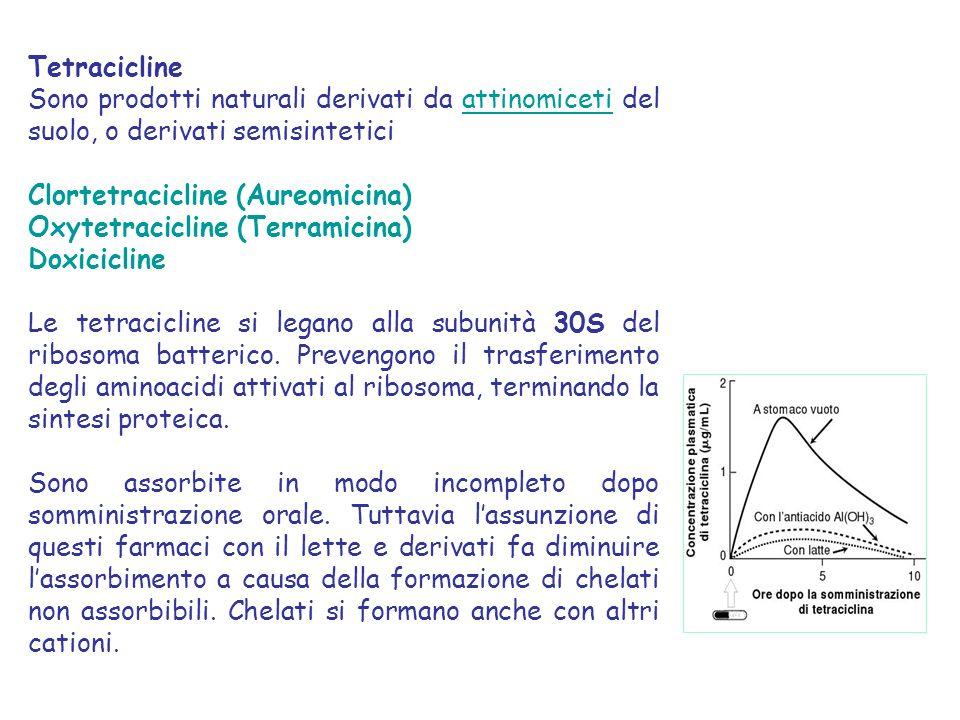 Tetracicline Sono prodotti naturali derivati da attinomiceti del suolo, o derivati semisintetici. Clortetracicline (Aureomicina)