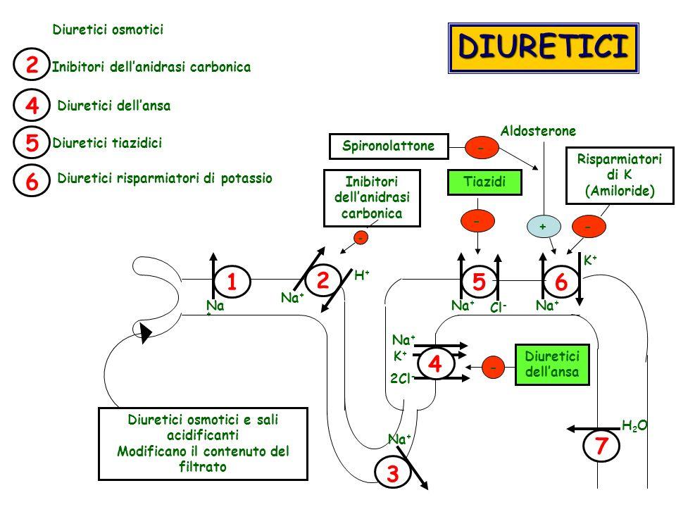 DIURETICI 2 4 5 6 1 2 5 6 4 7 3 Diuretici osmotici