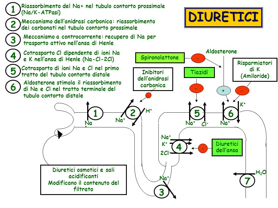 DIURETICI 1 2 4 5 6 3 7 Diuretici osmotici e sali acidificanti