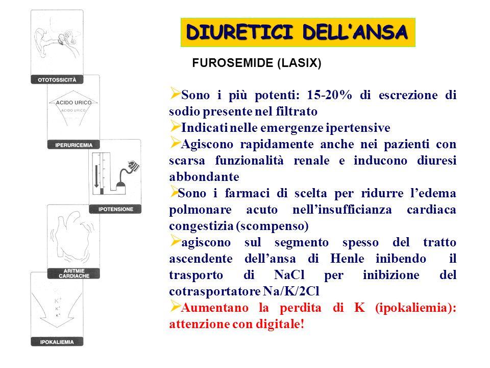 DIURETICI DELL'ANSA FUROSEMIDE (LASIX) Sono i più potenti: 15-20% di escrezione di sodio presente nel filtrato.