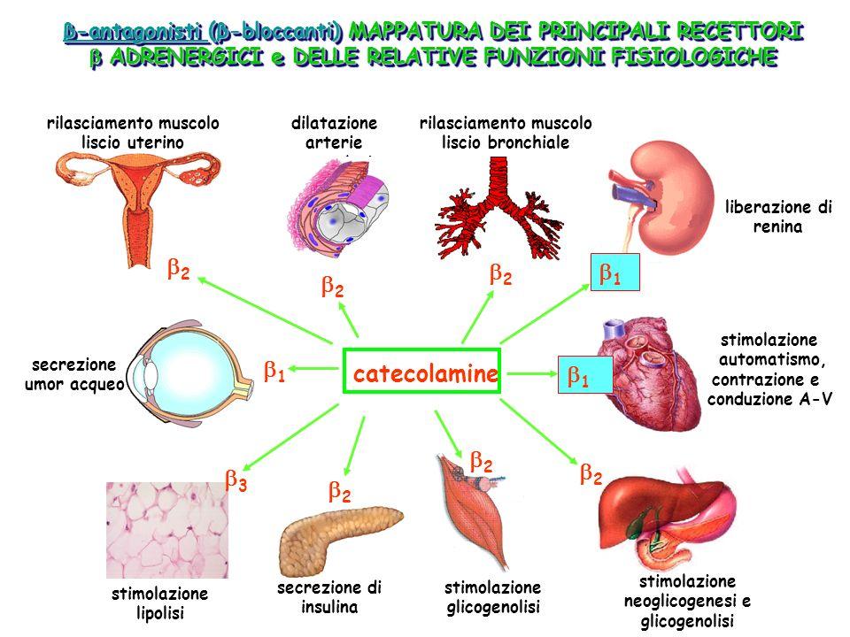 rilasciamento muscolo neoglicogenesi e glicogenolisi