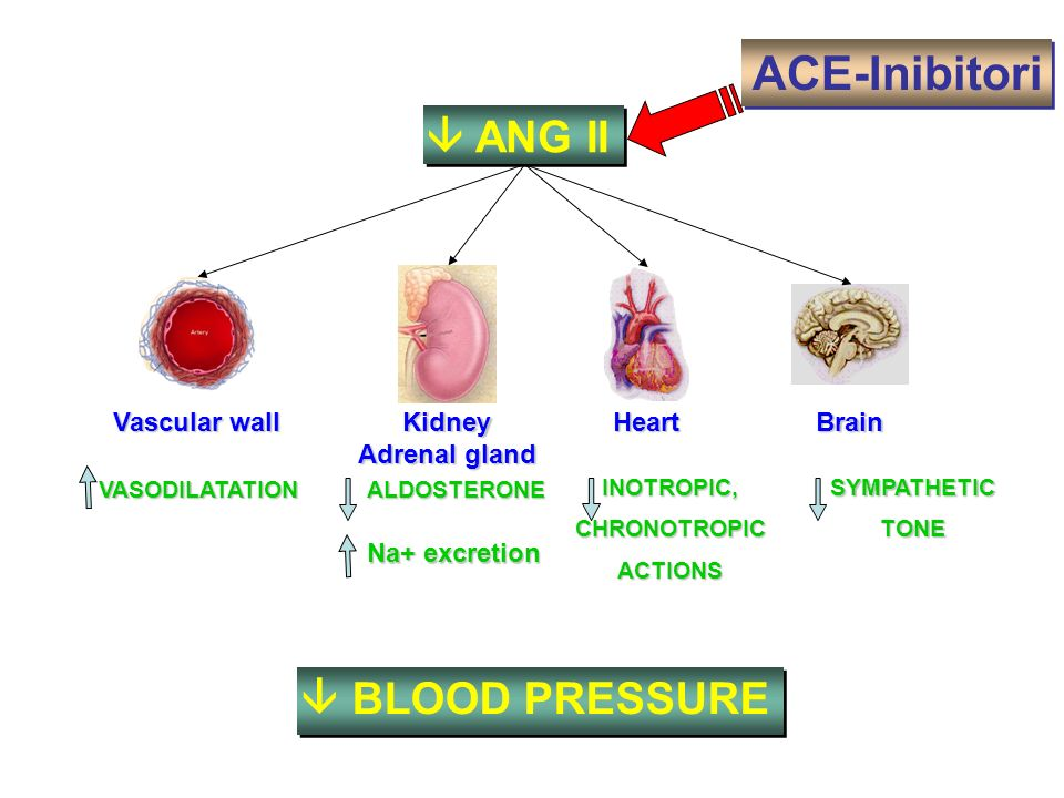 ACE-Inibitori  ANG II  BLOOD PRESSURE Kidney Heart Vascular wall