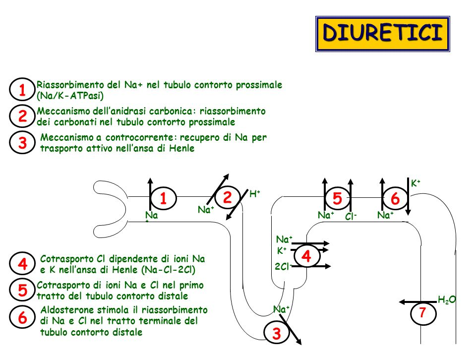 DIURETICI 1. Riassorbimento del Na+ nel tubulo contorto prossimale. (Na/K-ATPasi) 2.