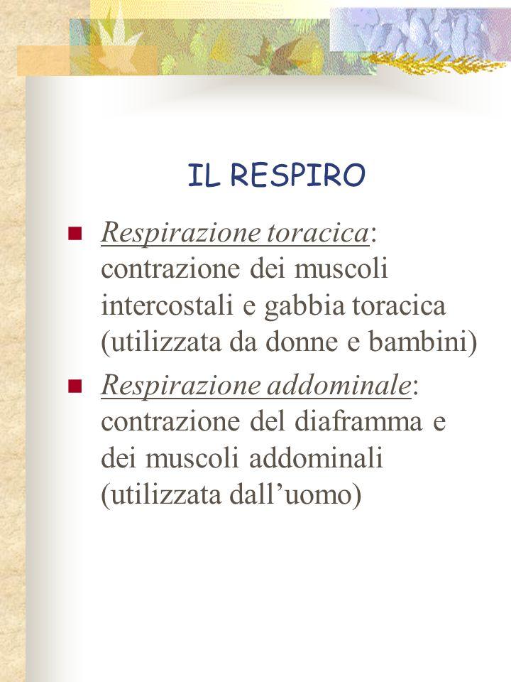IL RESPIRO Respirazione toracica: contrazione dei muscoli intercostali e gabbia toracica (utilizzata da donne e bambini)