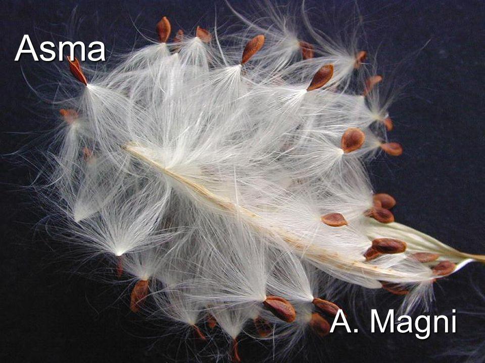 Asma A. Magni 1