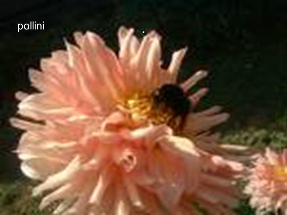 . pollini 1