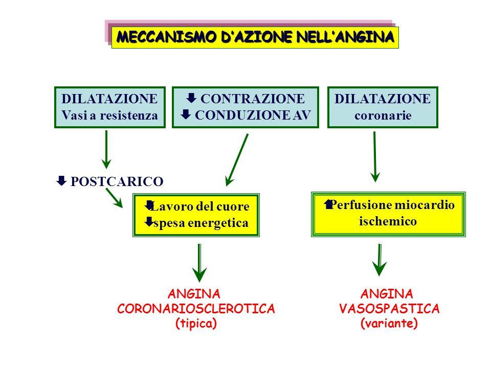 MECCANISMO D'AZIONE NELL'ANGINA