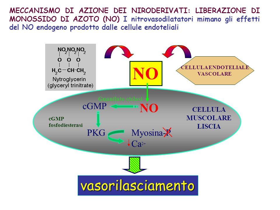 NO vasorilasciamento NO cGMP PKG Myosina-P Ca2+