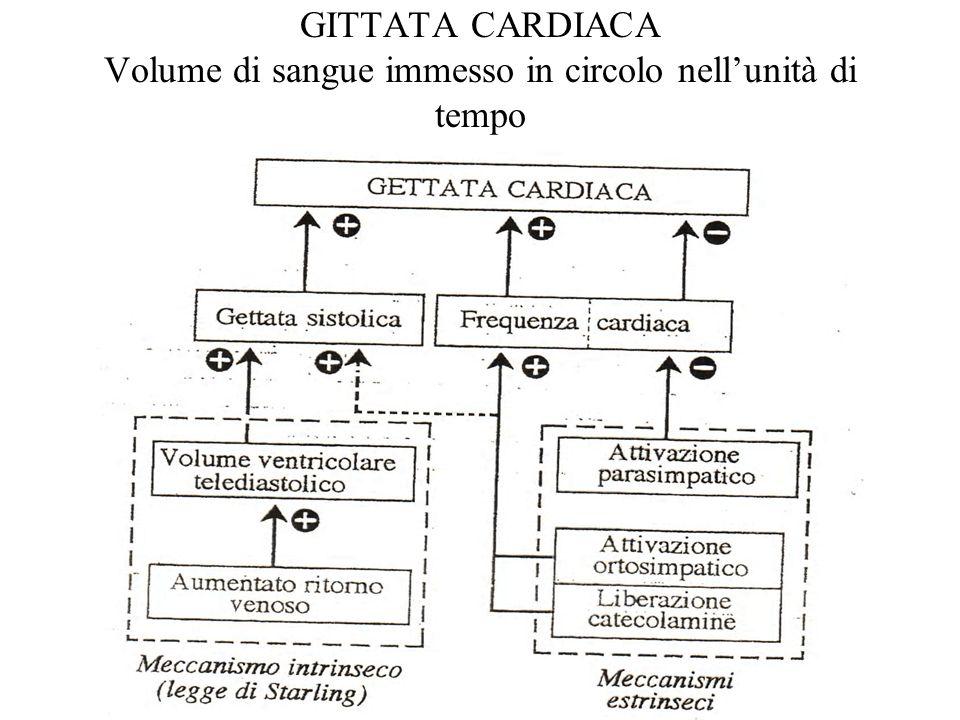 GITTATA CARDIACA Volume di sangue immesso in circolo nell'unità di tempo