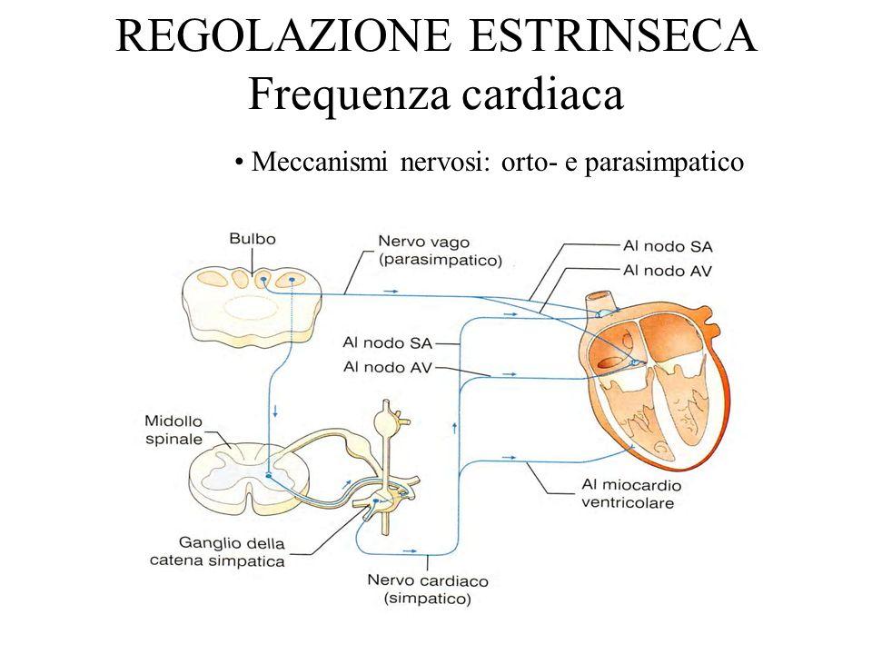 REGOLAZIONE ESTRINSECA Frequenza cardiaca