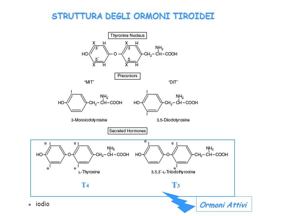 STRUTTURA DEGLI ORMONI TIROIDEI