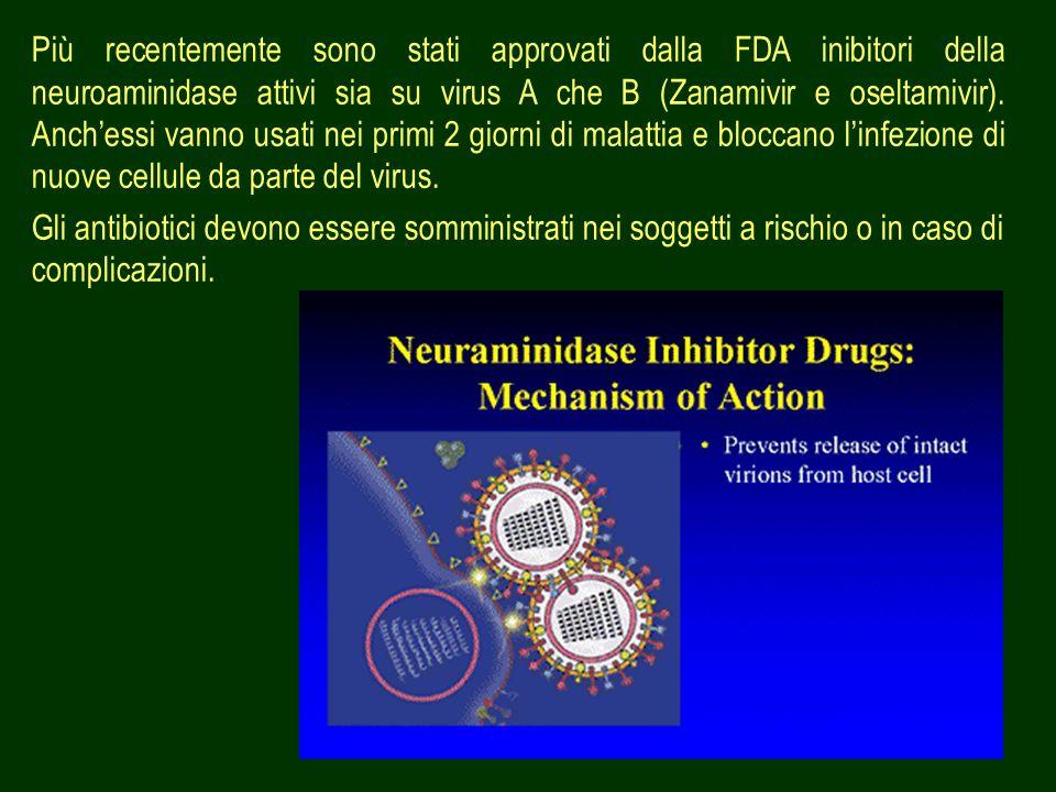 Più recentemente sono stati approvati dalla FDA inibitori della neuroaminidase attivi sia su virus A che B (Zanamivir e oseltamivir). Anch'essi vanno usati nei primi 2 giorni di malattia e bloccano l'infezione di nuove cellule da parte del virus.