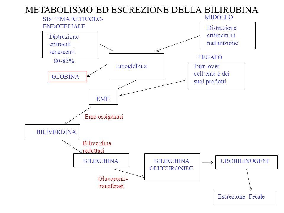 METABOLISMO ED ESCREZIONE DELLA BILIRUBINA