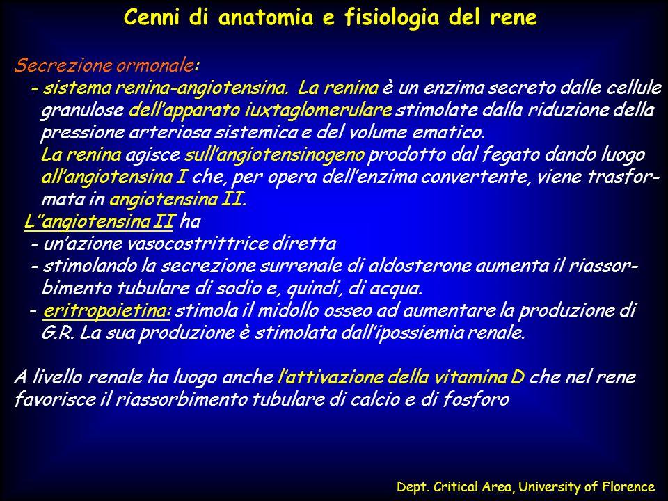 Cenni di anatomia e fisiologia del rene