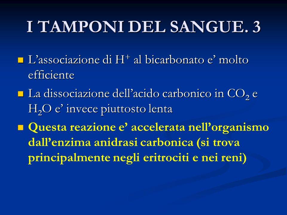 I TAMPONI DEL SANGUE. 3 L'associazione di H+ al bicarbonato e' molto efficiente.