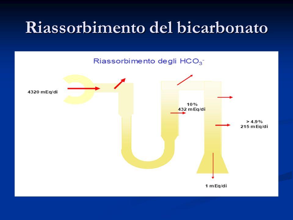 Riassorbimento del bicarbonato